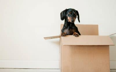 Common Move Out Inspection Mistakes to Avoid as a Fayetteville Landlord or Property Manager